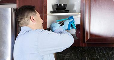 Faire le contrôle des insectes à la maison